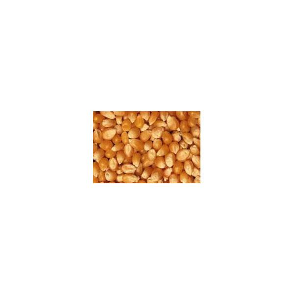 Popping Corn - Organic