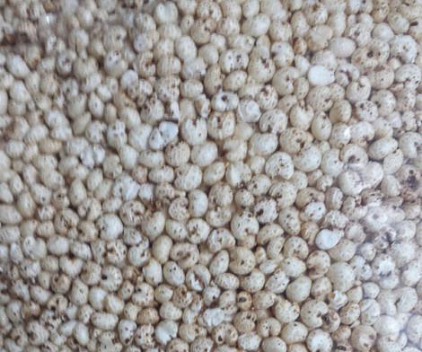 Millet - Organic puffed